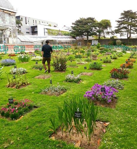 cueillette au jardin des plantes cafe du musée