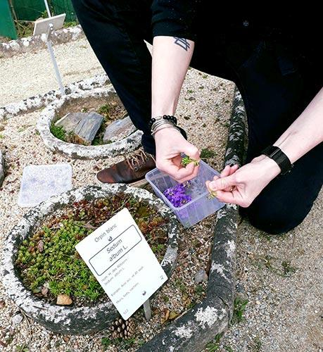 le chef Claire Habchi ramasse des fleurs comestibles fraîches, des herbes et des plantes aromatiques au Jardin des Plantes de Nantes
