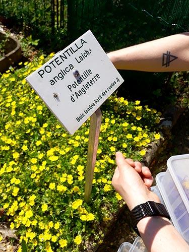 fleur cueillie dans le jardin des plantes de Nantes